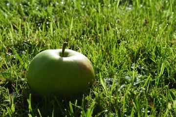 pomme dans l'herbe