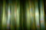 bamboo blur poster