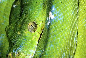 snake 10