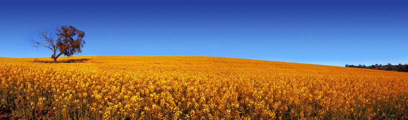 panoramiczne pole