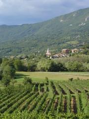 vignes de slovénie
