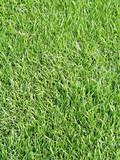 turf,lawn,grass poster