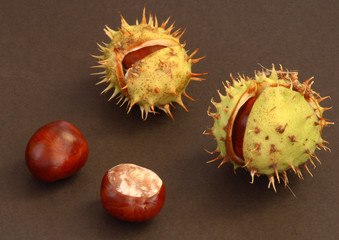 conkers on the black background