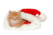 christmas kitten 3