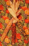 indian corn 2 poster