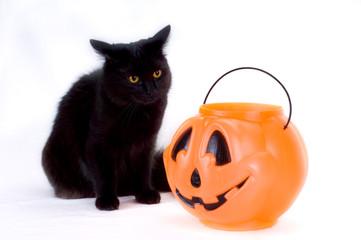 curious black kitten and candy pumpkin.