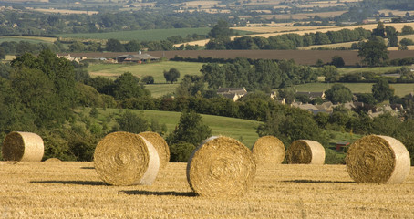 haybales cornfield agricultural landscape