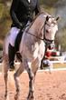 grey dressage horse