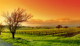 vineyard landscape - Fine Art prints