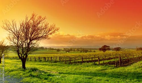 Leinwandbild Motiv vineyard landscape