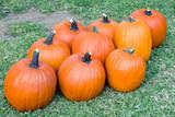 bunch of orange pumpkins poster