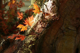 foliage on tree trunk poster