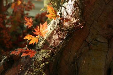 foliage on tree trunk