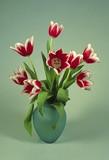 tulip arrangement poster