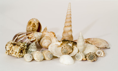 sea shells collage