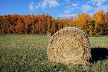 fall hay bail