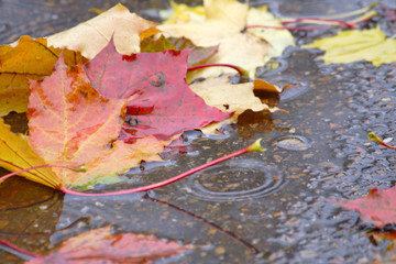 drizzling rain (47)