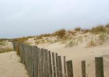 protection des dunes poster