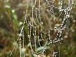 nice spiderweb