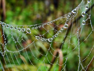 drops in the spiderweb