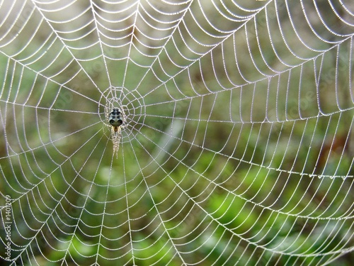 spiderweb in the meadow - 1401209