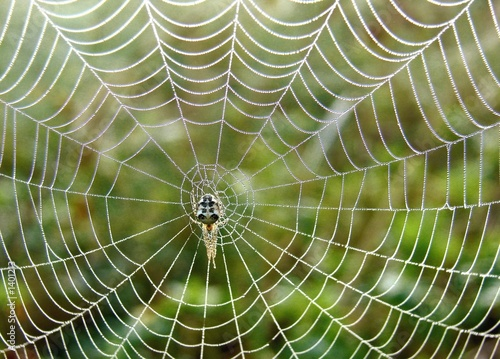 beautiful spiderweb