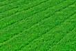 pelouse bien verte