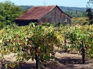 old barn and vineyard