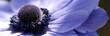 Quadro fleur bleue