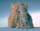 two kittens poster