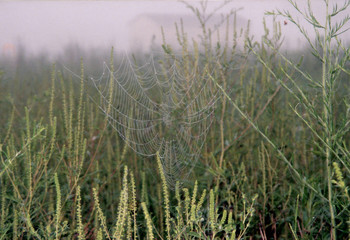 dew on the web