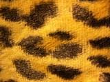 leopard skin fake poster