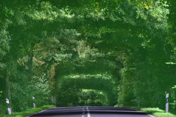 unesco naturdenkmal