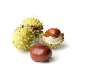 four chestnut