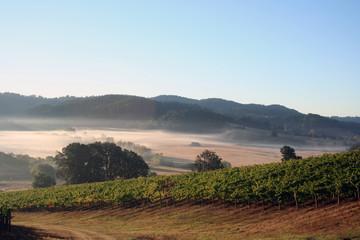 morning vineyards