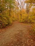 autumn dirt pathway poster