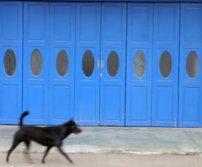 dog on the run - blurred