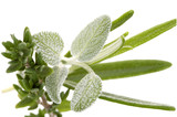 fresh herbs - sage and rosemary poster