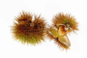 chestnut-3