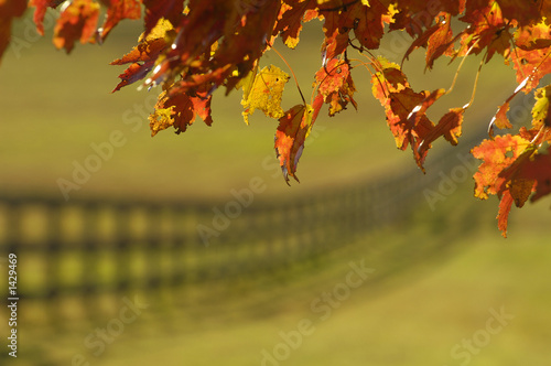 canvas print picture autumn maple