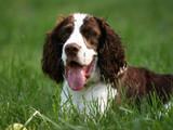 happy dog poster