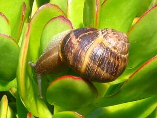 snail four