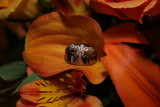 platinum rings on orange calililly flower poster