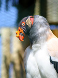exotických vtákov