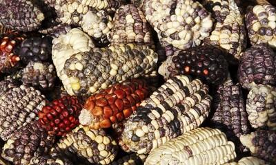 maize texture