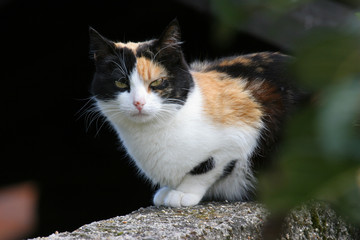 black, white and brown cat