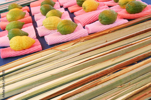 jewish citrons & ceremonial palm frond display