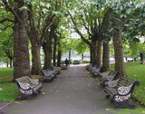 tree lined walkway poster