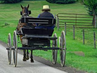 man driving wagon