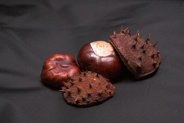 conkers and cases